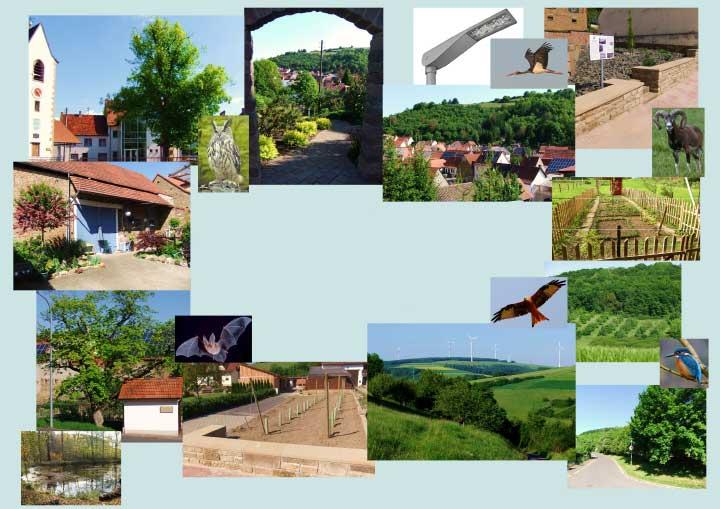 In Waldgrehweiler leben bedrohte und seltene Tierarten